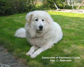 Hirtenhundewelt De Europa Pyrenäenberghund